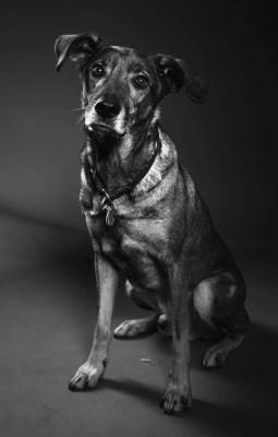 Studio Hund Diggah