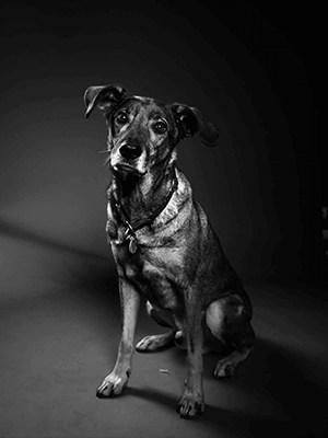 Hund Diggah